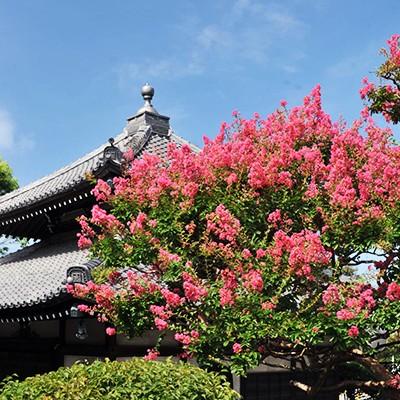 鎌倉七福神をまわる観光ランコース(鎌倉市)