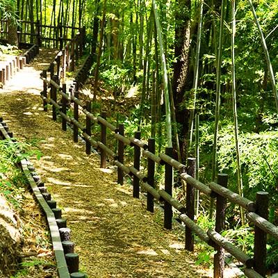 広大な自然を楽しむ生田緑地コース(川崎市)