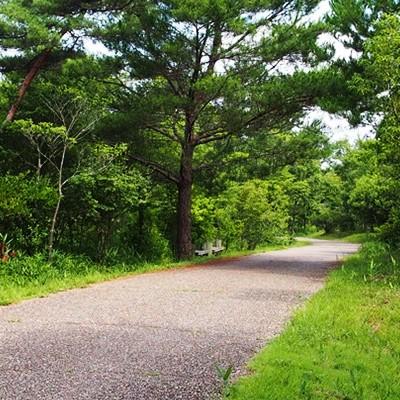 自然いっぱいの憩いの場・上野森林公園コース(伊賀市)