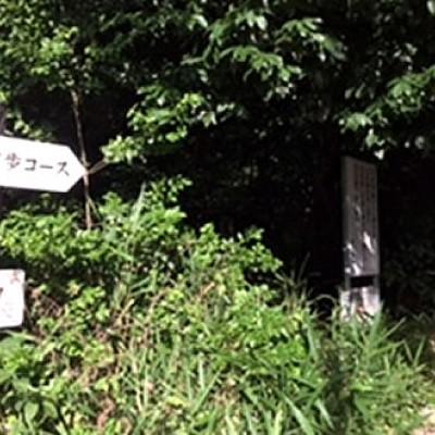 クロカンも楽しめる東山公園一万歩コースラン(名古屋市)