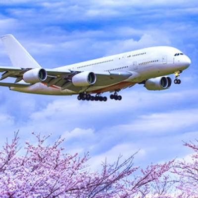 飛行機を見ながら走る!さくらの山公園コース(成田市)