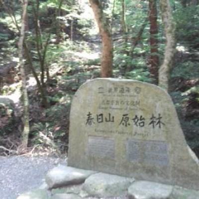 春日山原始林を走る森林浴コース(奈良市)