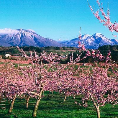 春の花々の名所をめぐる!北信四岳を臨む山岳コース(飯綱町)