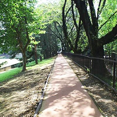 地元ランナーに人気。栃木県総合運動公園コース(宇都宮市)