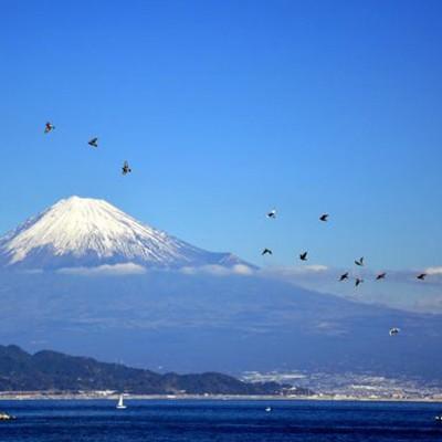 白砂青松と富士山!三保松原、神の道コース(静岡市)