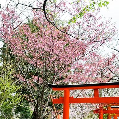 京都西大路通から原谷交差点往復コース(京都市)