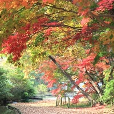 花々と緑豊かな公園、清水公園周回コース(野田市)