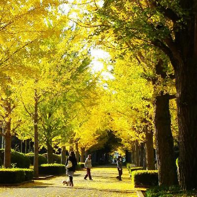 選べる3コース・笠松運動公園コース(那珂市)