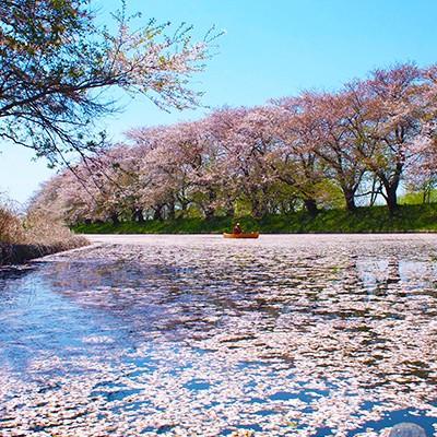 筑波山を見ながら走る小貝川土手コース(守谷市)