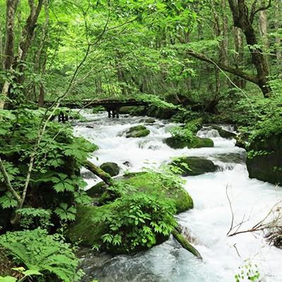 緑と水に囲まれて走る奥入瀬渓流散策コース(十和田市)