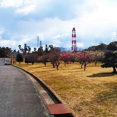 インターバルにおすすめ!河西公園トリムコース(和歌山市)