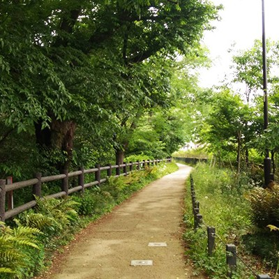 江戸時代の上水道跡を走る!玉川上水緑道コース(新宿区)