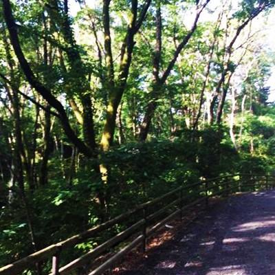森の中を走る。台原森林公園コース(仙台市)