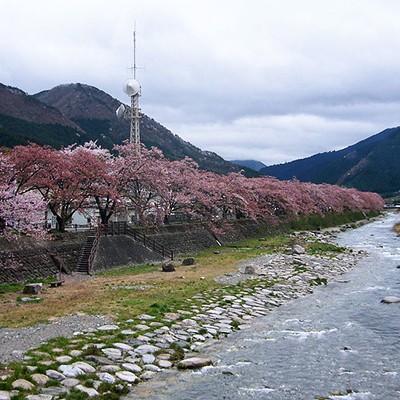 走り込みに最適!千代(せんだい)川沿い周回コース(鳥取市)