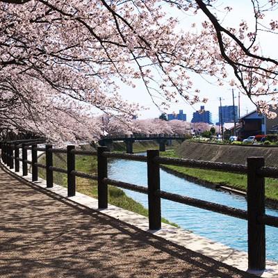 のどかな景色を楽しむ袋川土手周回コース(鳥取市)
