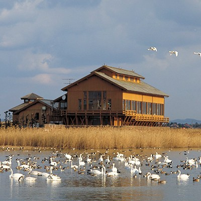 山陰屈指の野鳥生息地・米子水鳥公園コース(米子市)