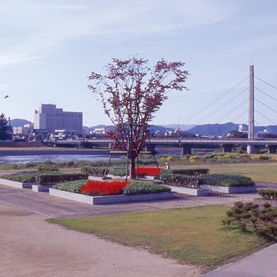 春には菜の花ロード!日野川河川敷コース(越前市)