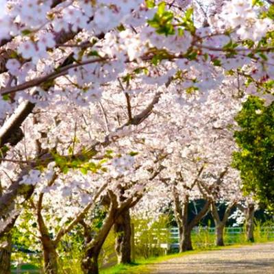 水と緑のオアシス!佐鳴湖(さなるこ)周回コース(浜松市)