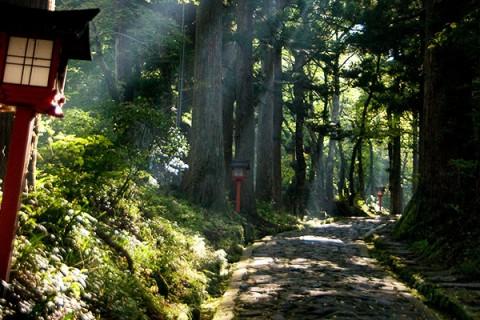 トレイルとロードを走る横手道~桝水周遊コース(大山町)