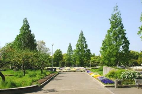 地元ランナーの練習拠点。久宝寺緑地周回コース(八尾市)