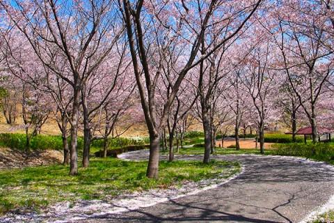 兵庫県最大級の公園!播磨中央公園の周回コース(加東市)