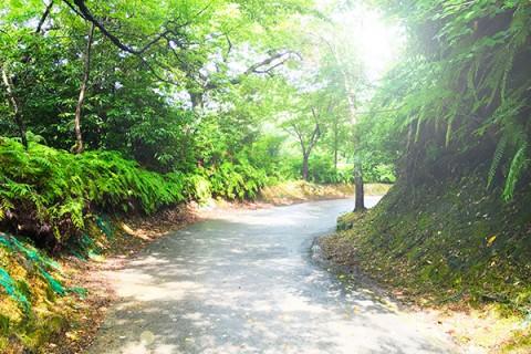 激坂ありの山道・敦賀市内と景色を楽しむコース(敦賀市)