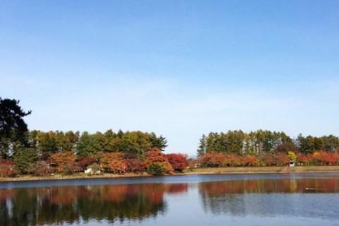 白鳥飛来の池から北上総合運動公園コース(北上市)