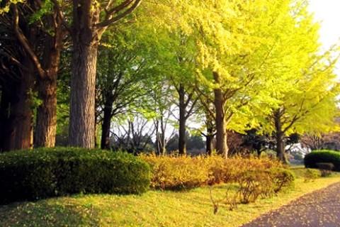 九十九里平野が一望!昭和の森公園クロカンコース(千葉市)