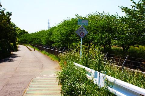 江戸時代の農業用水路!緑のヘルシーロードコース(蓮田市)