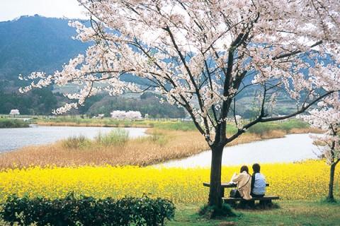 花咲く遊歩道・上堰潟(うわせきがた)公園コース(新潟市)