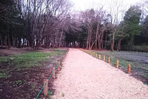森林コースを走る。みずほの自然の森公園コース(宇都宮市)