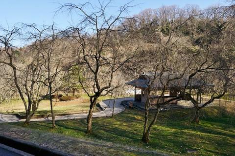 広大な芝生でクロカン練習、奥卯辰山健民公園(金沢市)