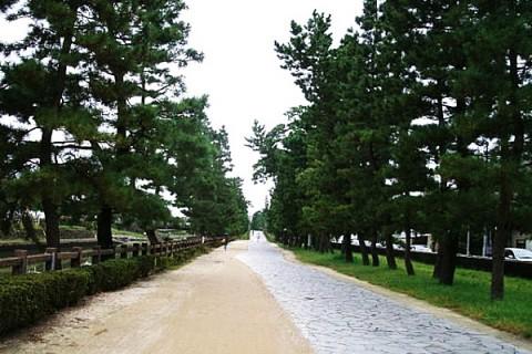 歴史ある松並木!草加松原遊歩道コース(草加市)