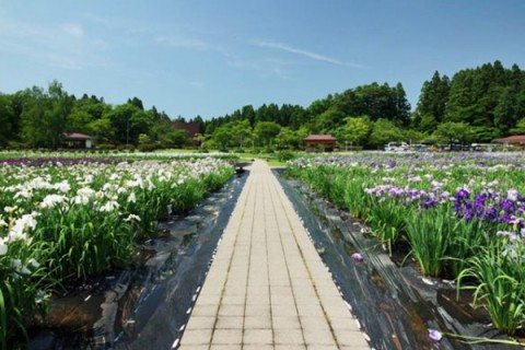 湿原に白鳥!男潟と女潟を囲む小泉潟公園コース(秋田市)