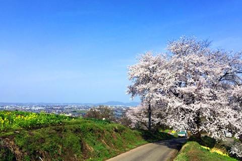市内を一望する大パノラマ!大崎山山頂コース(三条市)
