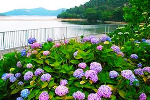 古墳群に広がる水鳥の楽園、平荘湖周回コース(加古川市)