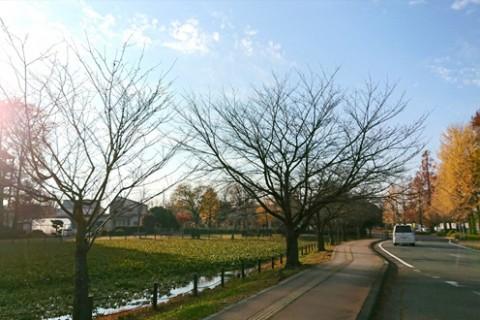 「陸王」の舞台!行田市総合公園周回コース(行田市)