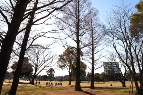 緑豊かな大学農学部跡地、総合文化公園外周コース(宮崎市)