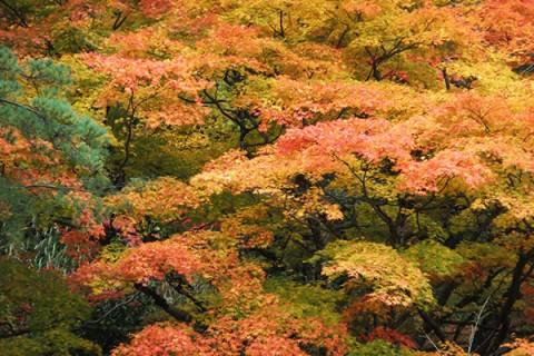 愛宕山の遊歩道を走るクロカンコース(五泉市)