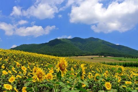 蒜山(ひるぜん)高原サイクリングコース(真庭市)