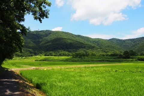 山道をゆく宝篋山(ほうきょうさん)トレイルラン(つくば市)