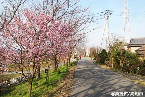平坦で走りやすい鏡川河川敷コース(高知市)