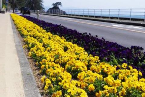 太平洋を眺めるプチ龍馬マラソンコース(高知市)
