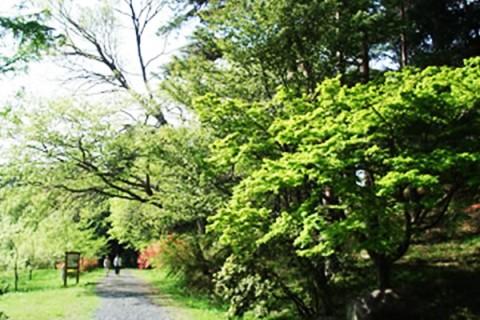 自然林の中をクロカン練習!茨城県民の森コース(那珂市)