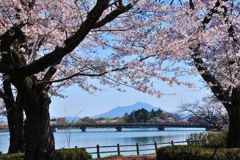 茨城百景の美観・砂沼マラソンコース(下妻市)