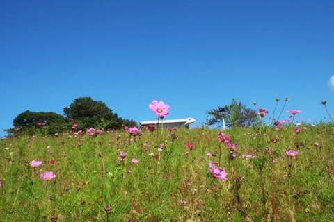 みかん畑と絶景!鷲ヶ峰の山上りコース(有田川町)