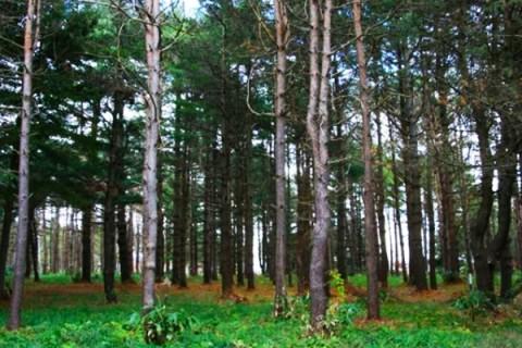 広大な自然公園のトレイル!野幌森林公園コース(札幌市)
