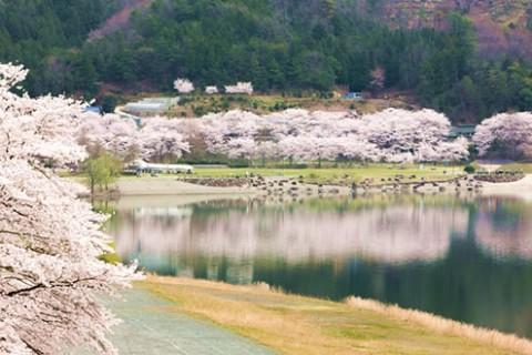 景色が美しいダム湖、八千代湖周回コース(安芸高田市)
