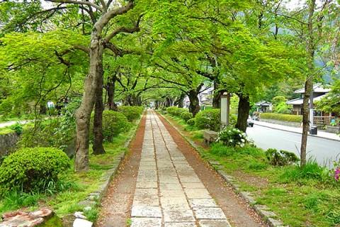 南禅寺から哲学の道、鴨川河川敷コース(京都市)