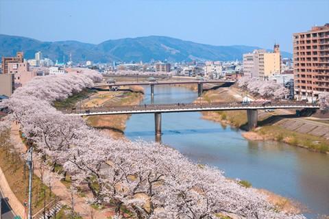桜並木と川沿いの景色・足羽川ジョギングコース(福井市)